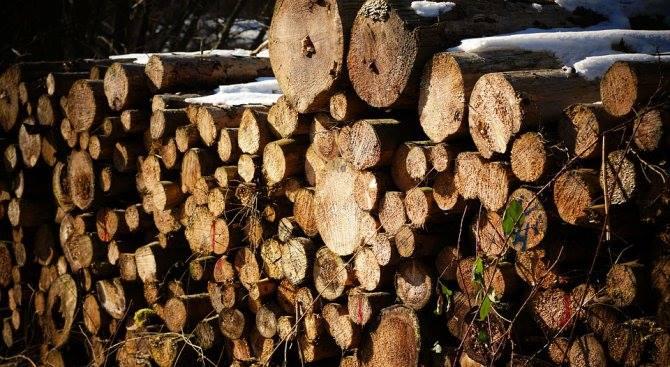 дървесина.jpg