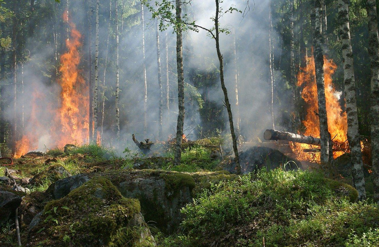 forest-fire-432870_1280.jpg